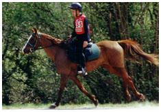 vente de cheval pur sang arabe