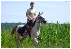 chevaux a vendre pur polonais
